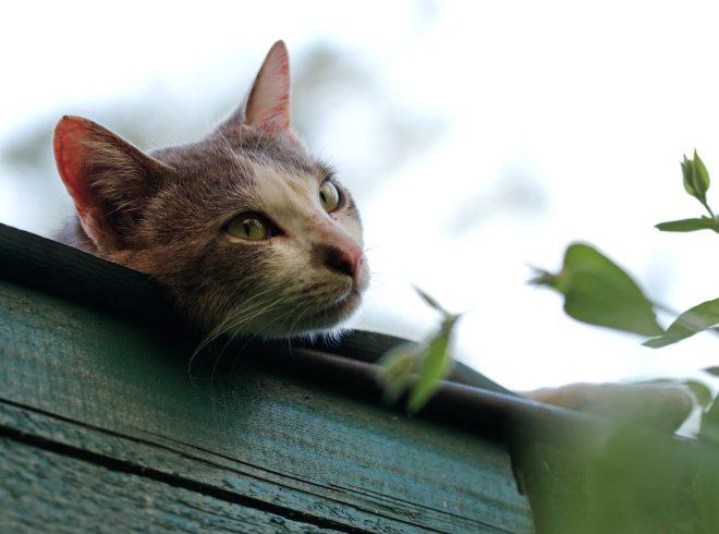 animal-blur-cat-1055359.jpg